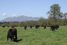 音更町すずらん和牛